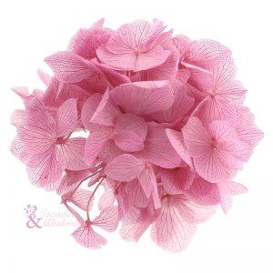 Ramillete Hortensia preservada