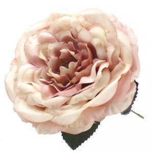 Rosa Evelyn 14 cm.