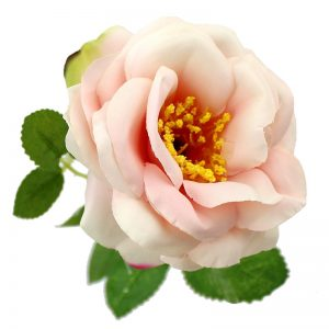 Rosa Nancy 8cm.