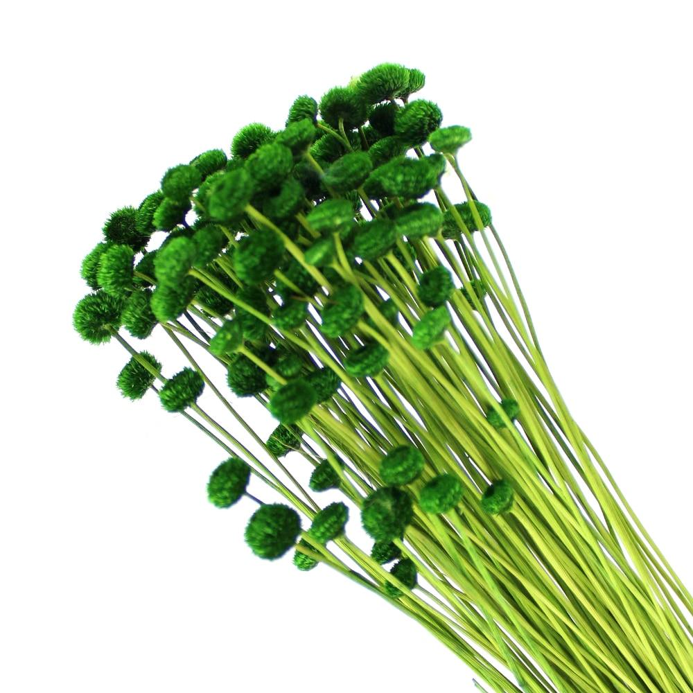 AMARELINO ATERCIOPELADO verde