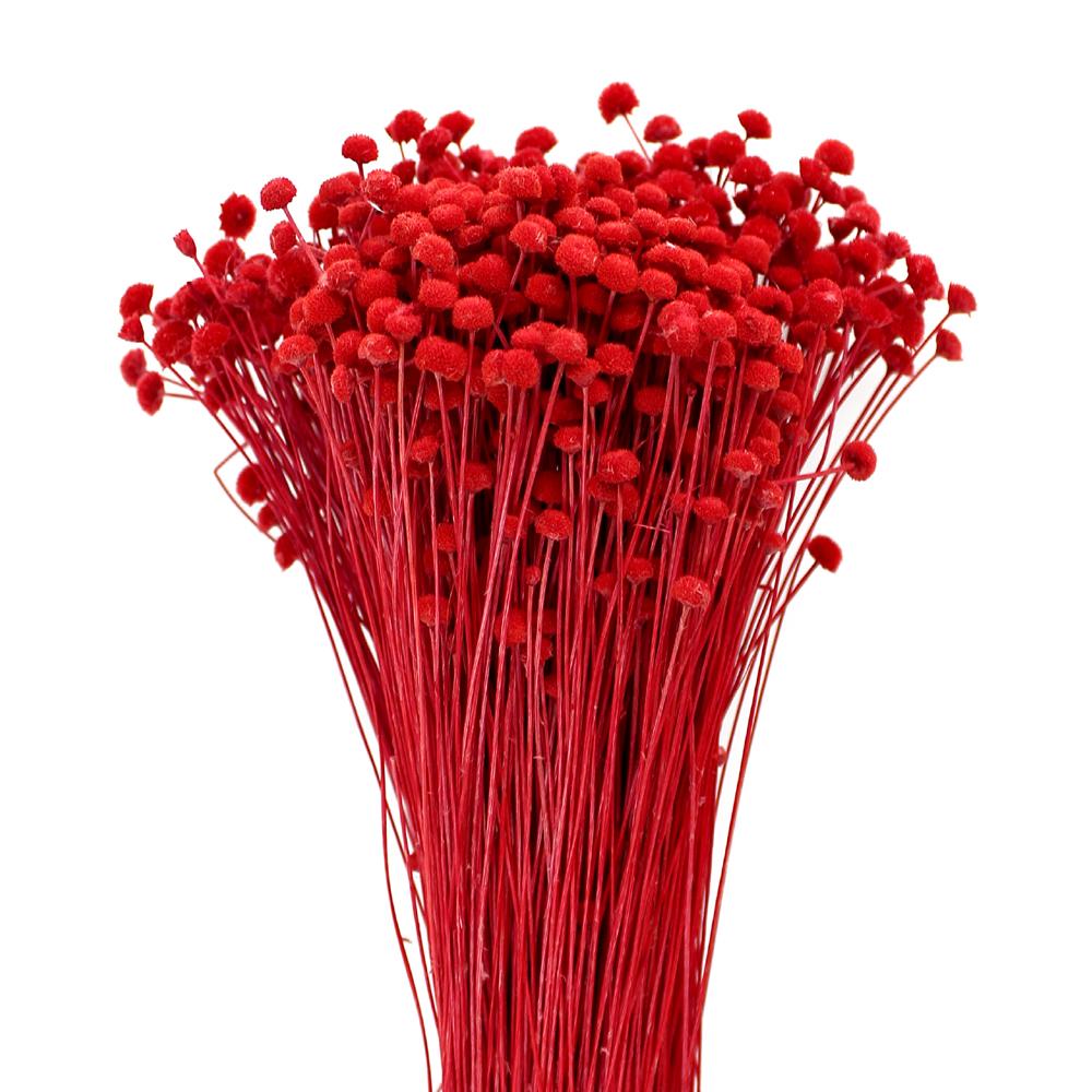 Botao mini preservado rojo