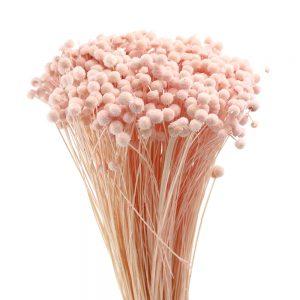Botao mini preservado rosa nude