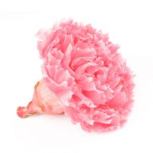 Clavel preservado rosa