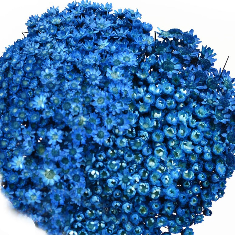 MINI MARGARITAS GLIXIA azul