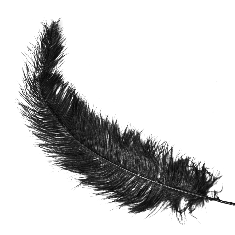 Pluma Avestruz 35 negro