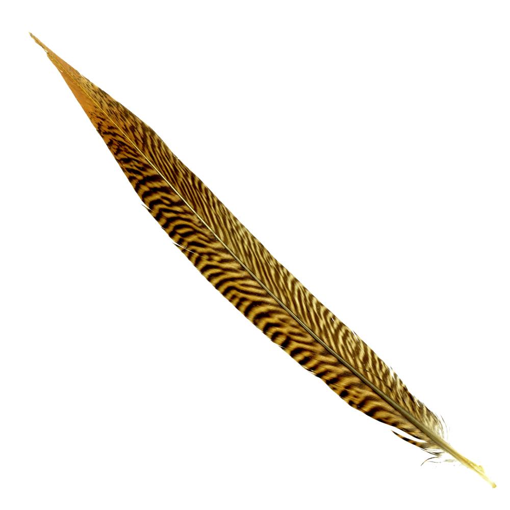 Pluma faisán dorado 25 30 CM