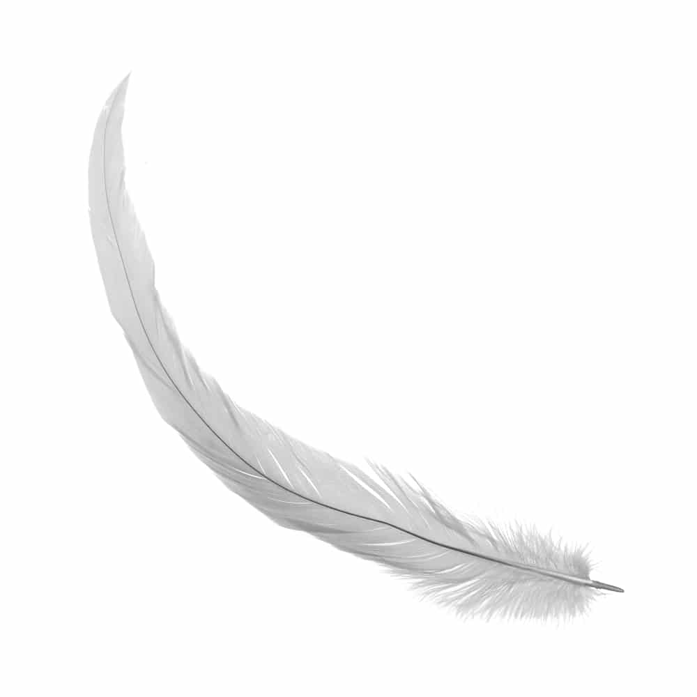 Pluma gallo 18 25 cm c defec gris plata