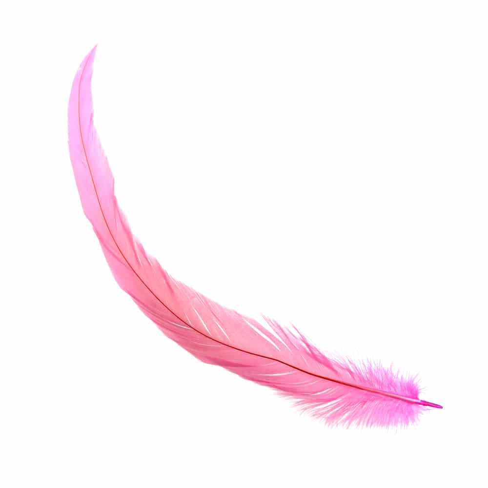 Pluma gallo 18 25 cm c defec rosa