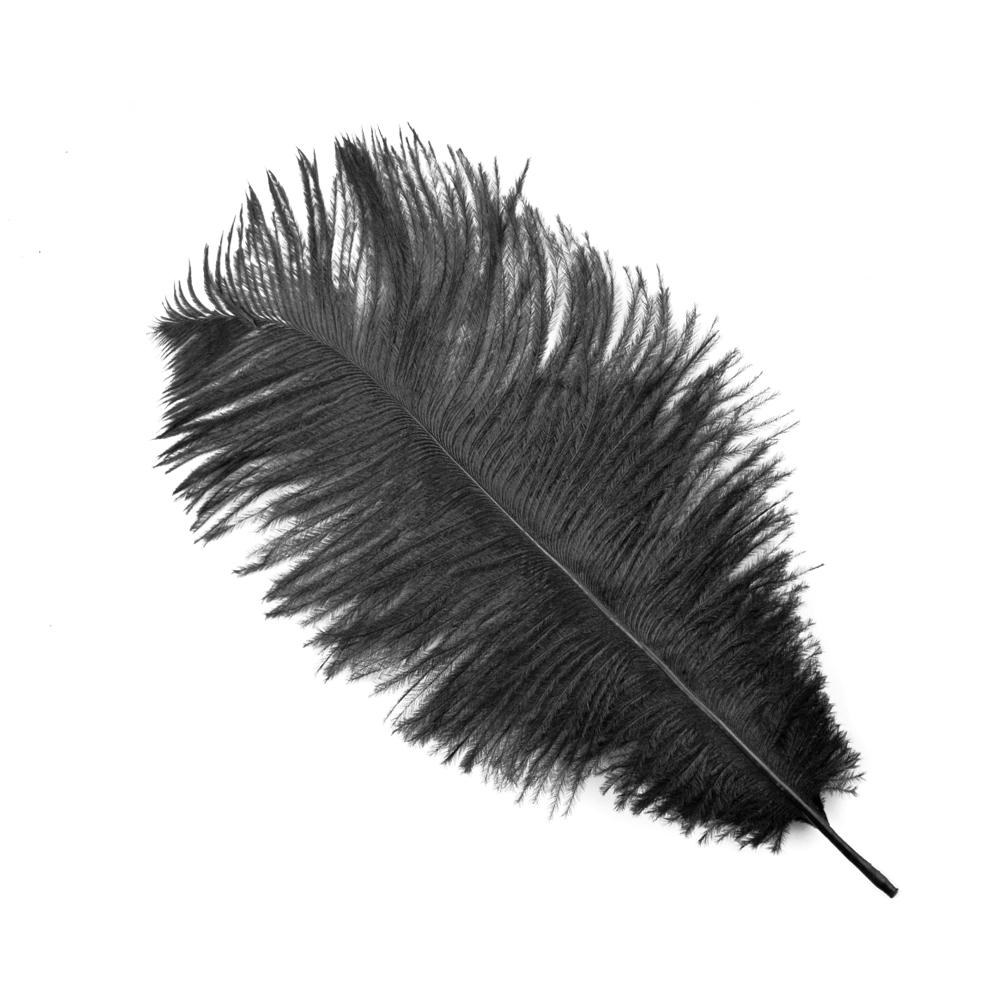 Plumas Avestruz 10 15 negro