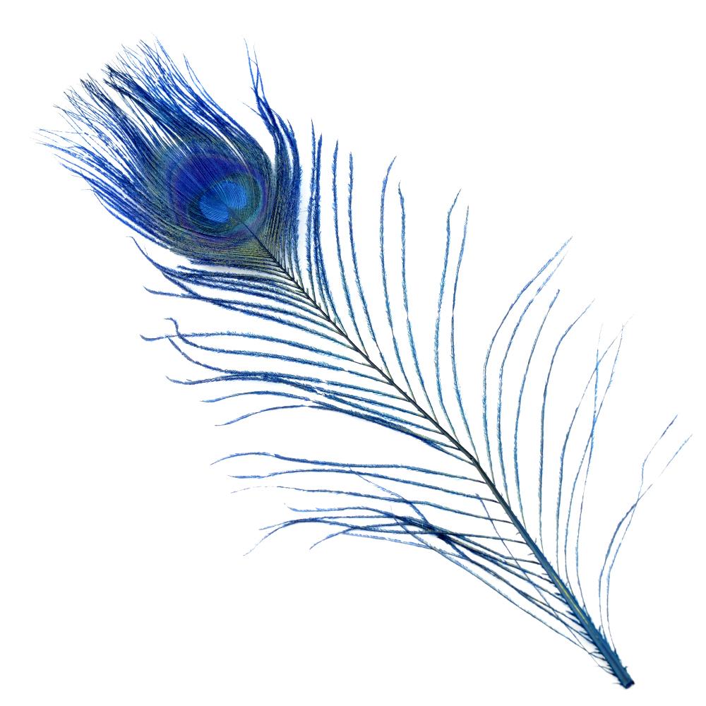 Plumas Pavo Real Colores 25 cm azul marino