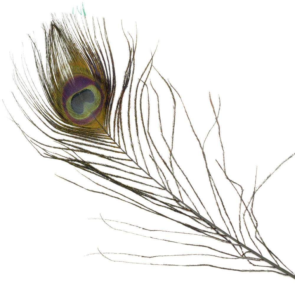 Plumas Pavo Real Colores 25 cm negro