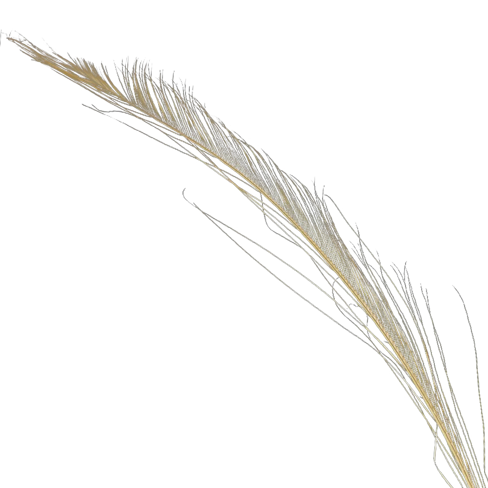 Plumas espada 30 cm beige