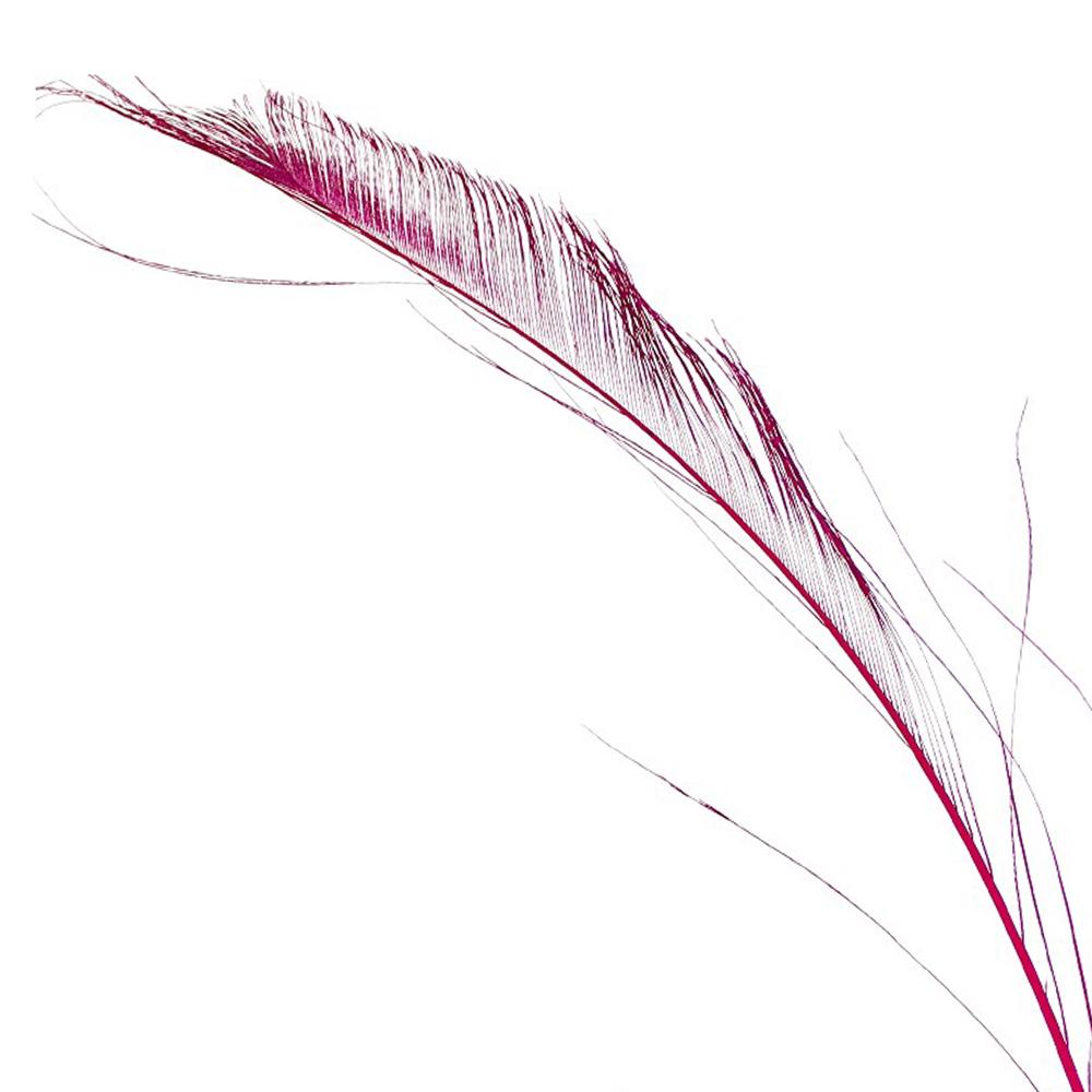 Plumas espada 30 cm buganvilla