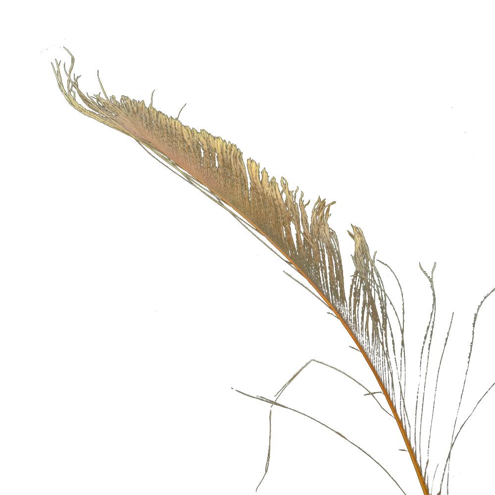 Plumas espada 30 cm cobre