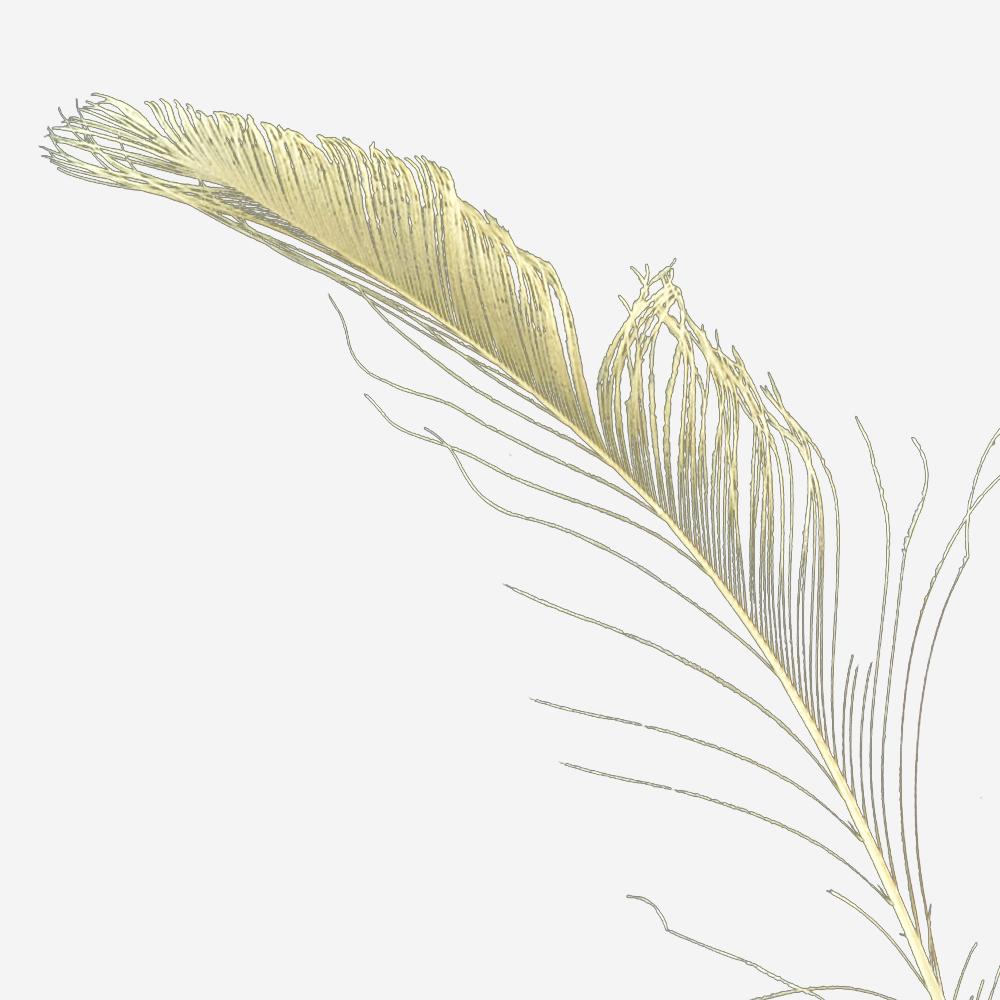 Plumas espada 30 cm crudo