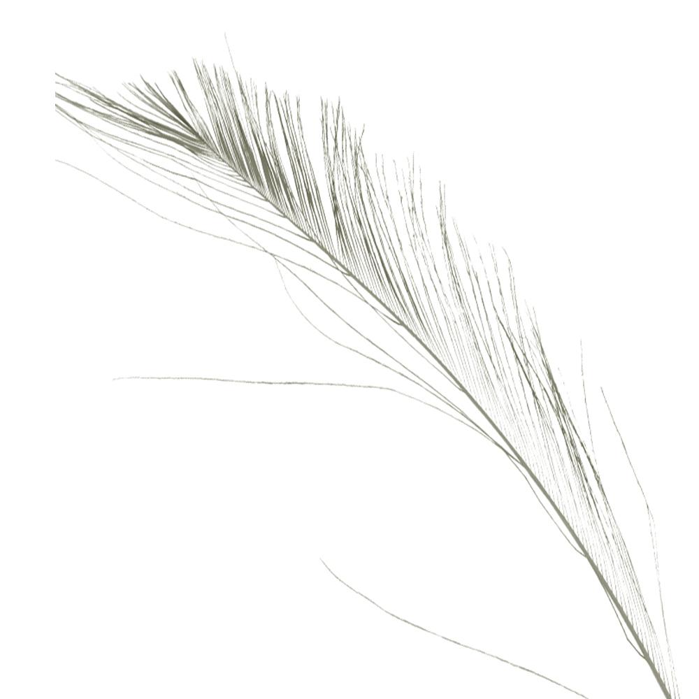 Plumas espada 30 cm gris plata