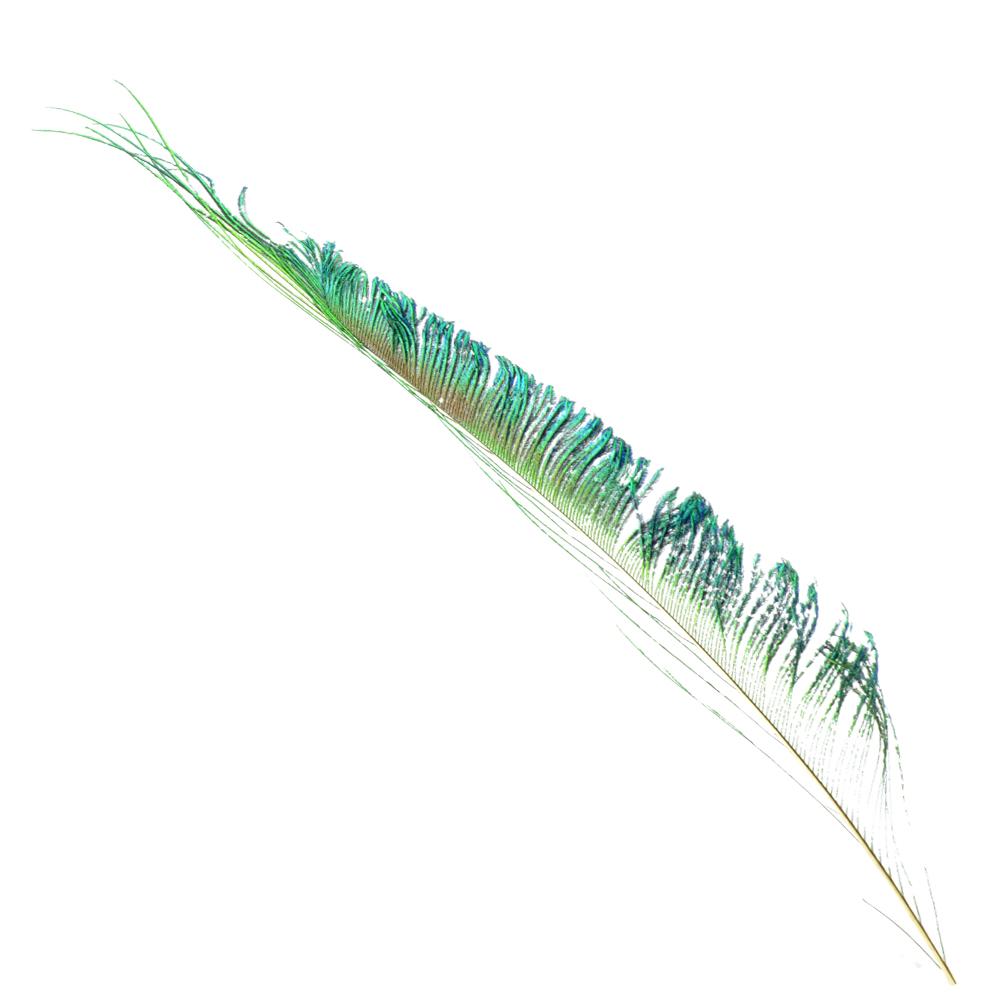 Plumas espada 30 cm natural