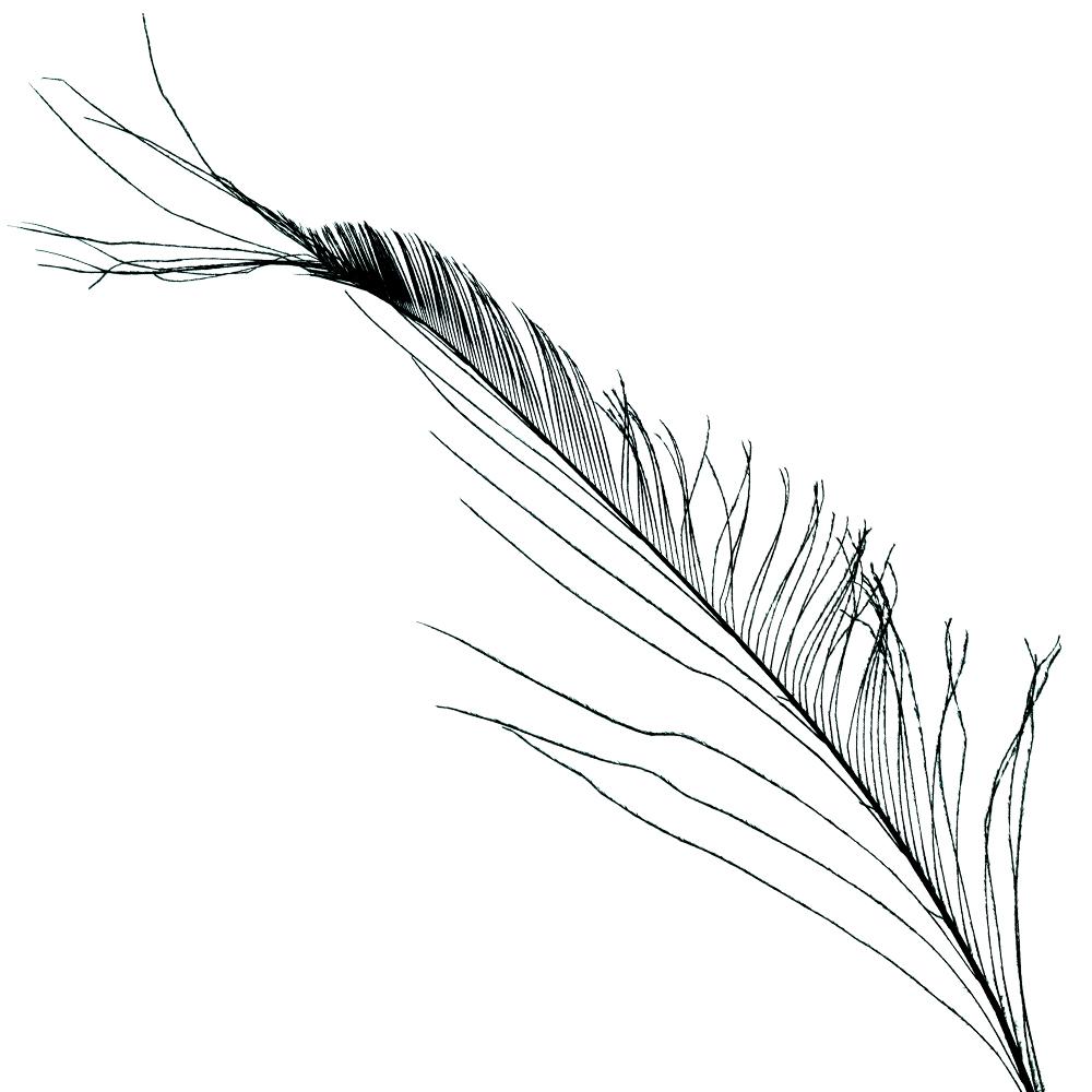 Plumas espada 30 cm negro