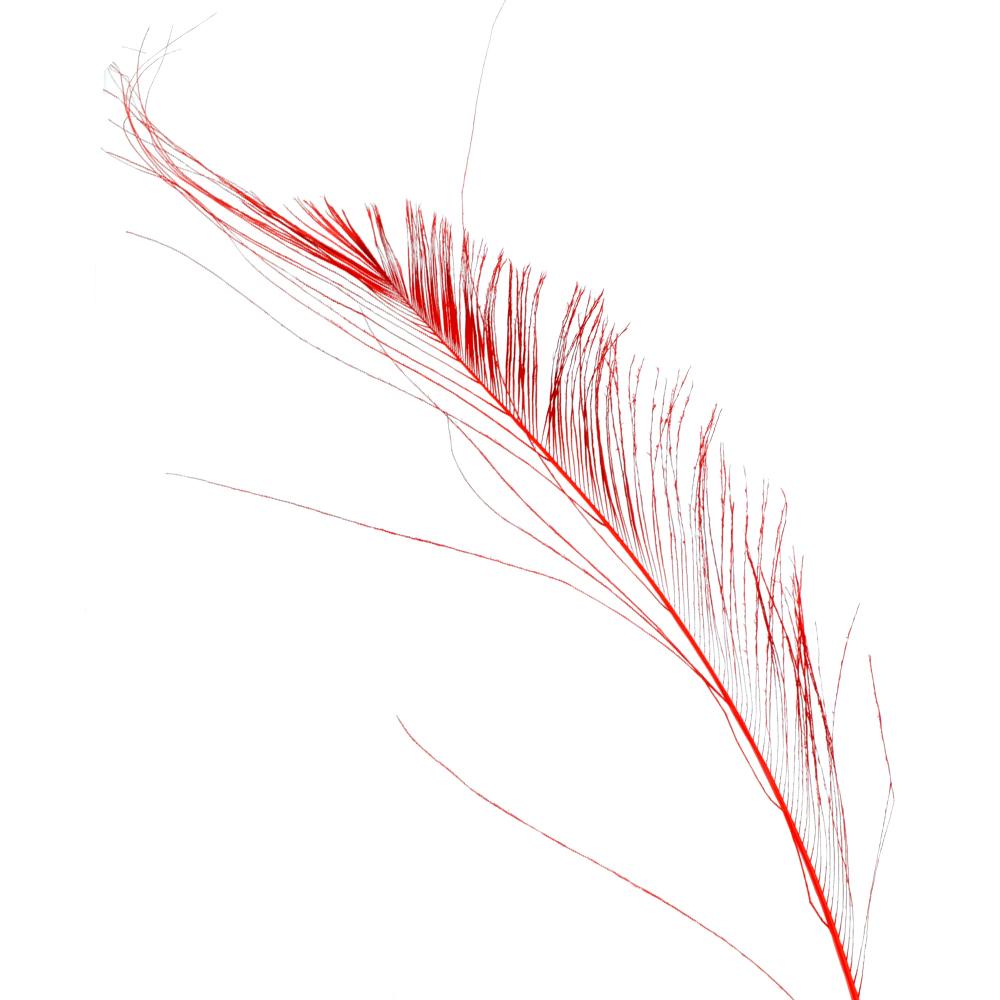 Plumas espada 30 cm rojo