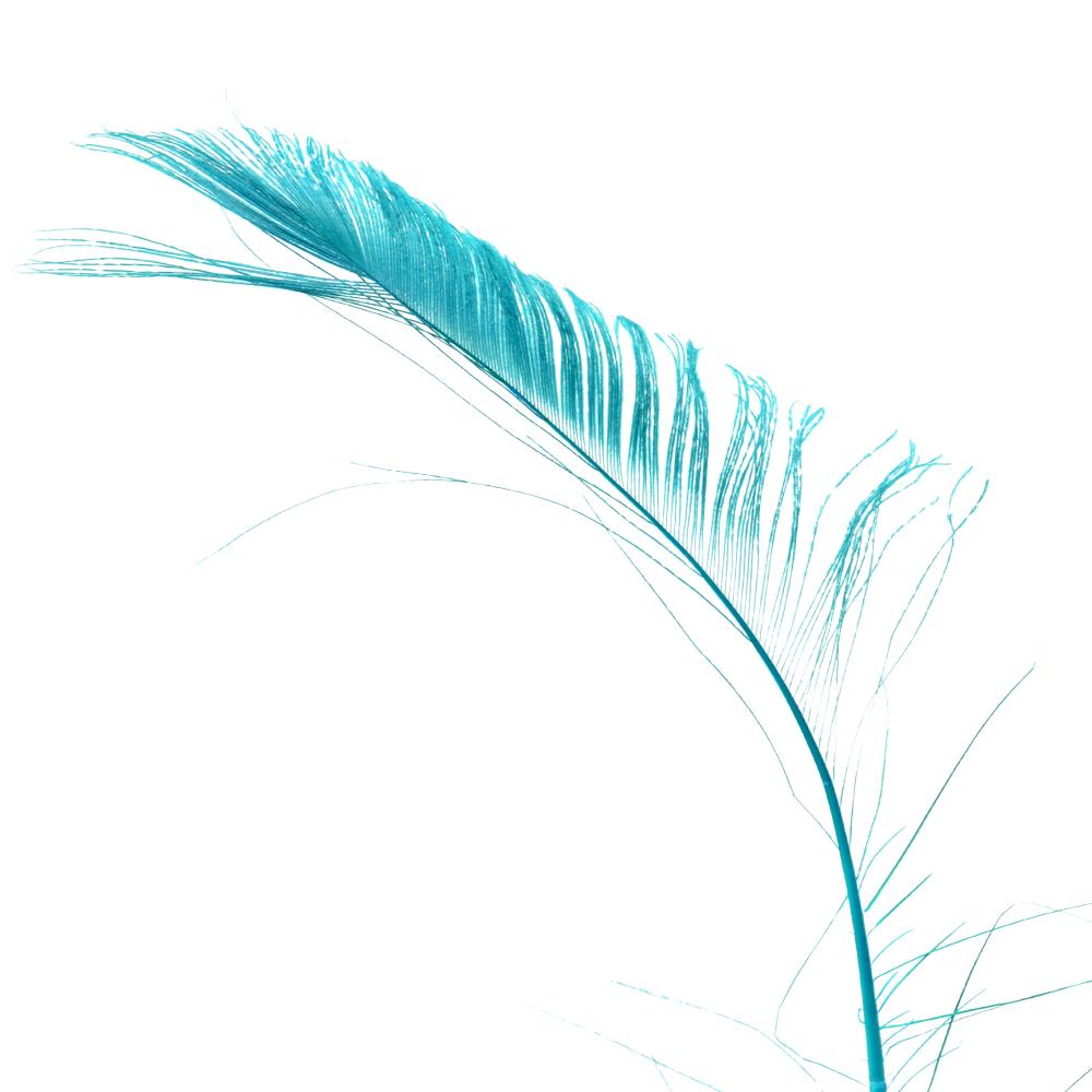 Plumas espada 30 cm verde agua