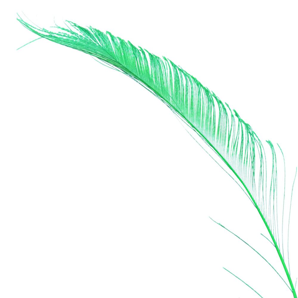 Plumas espada 30 cm verde jungla