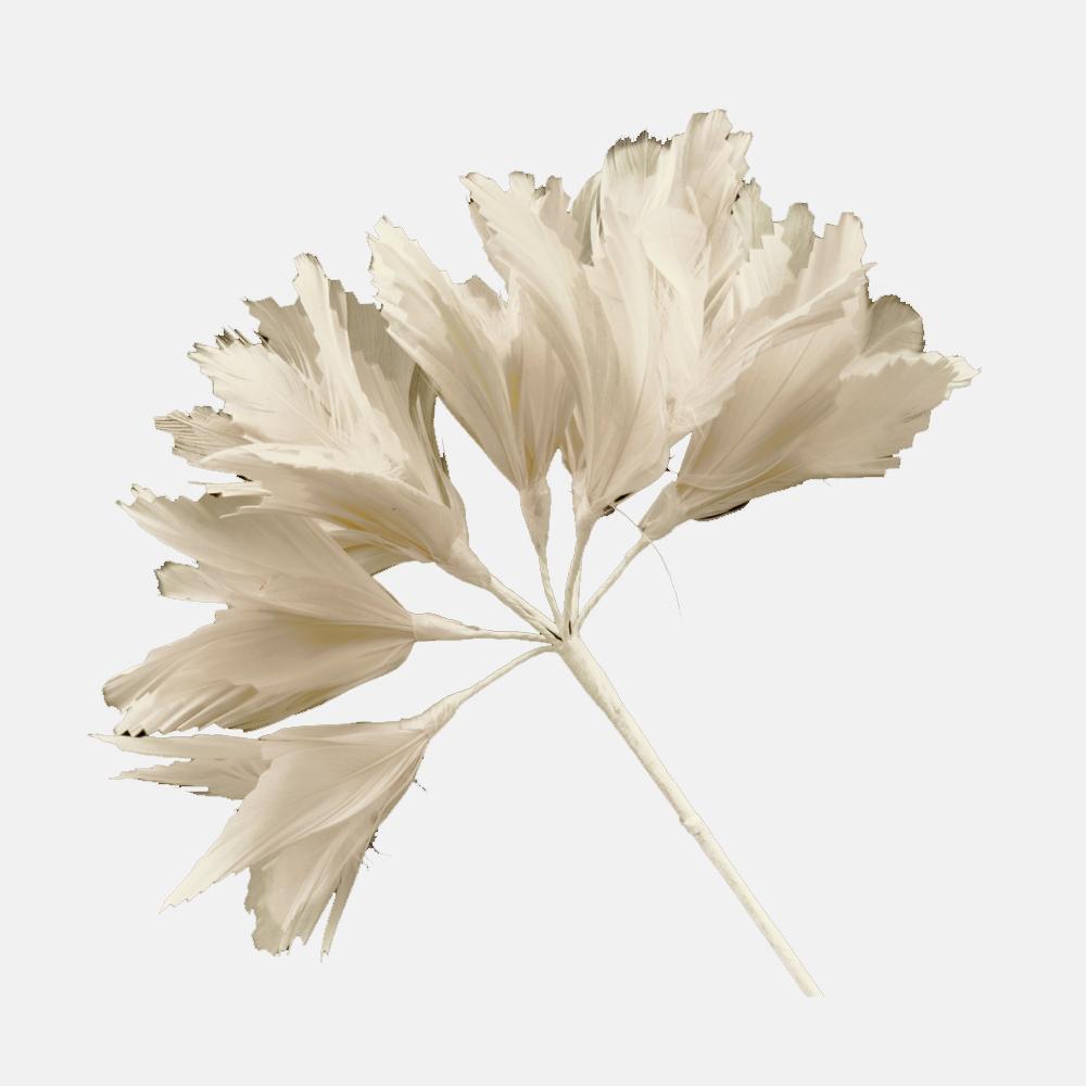 Pomo Hortensia 20 cm crudo