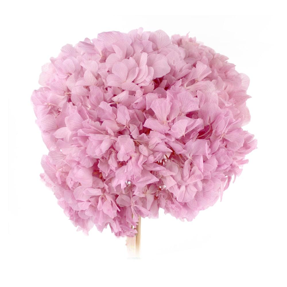 RAMO HORTENSIAS PRESERVADAS rosa maquillaje