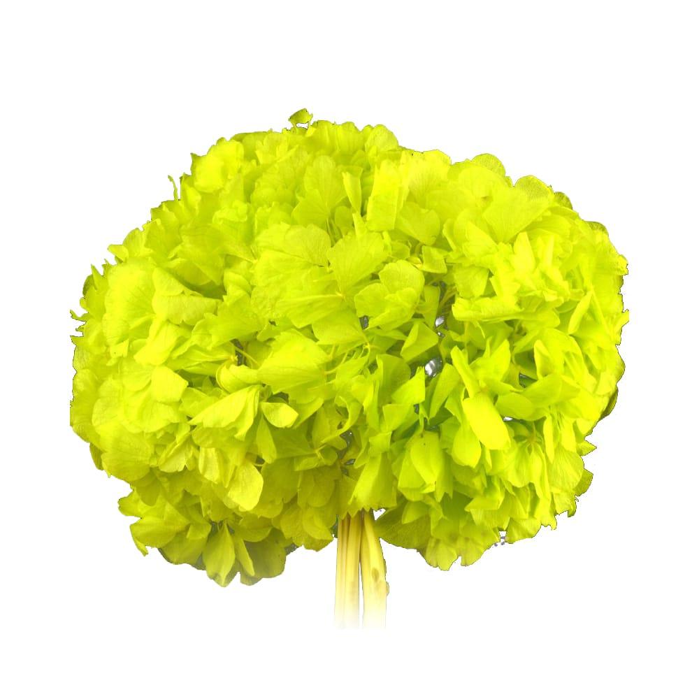 RAMO HORTENSIAS PRESERVADAS verde limón
