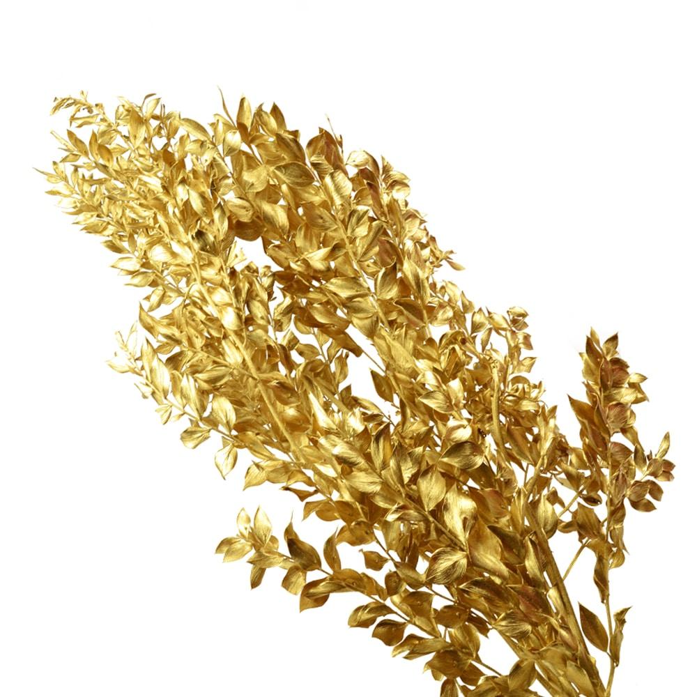RUSCUS PRESERVADO oro