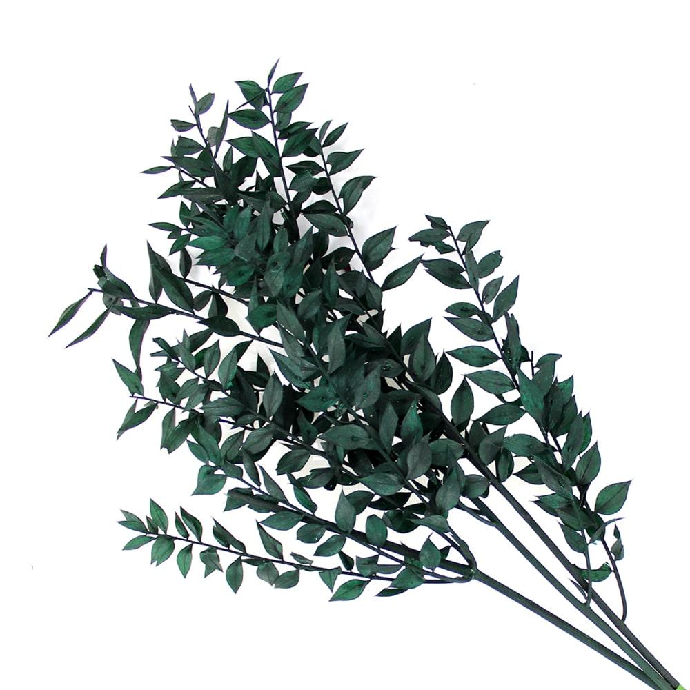 RUSCUS PRESERVADO verde