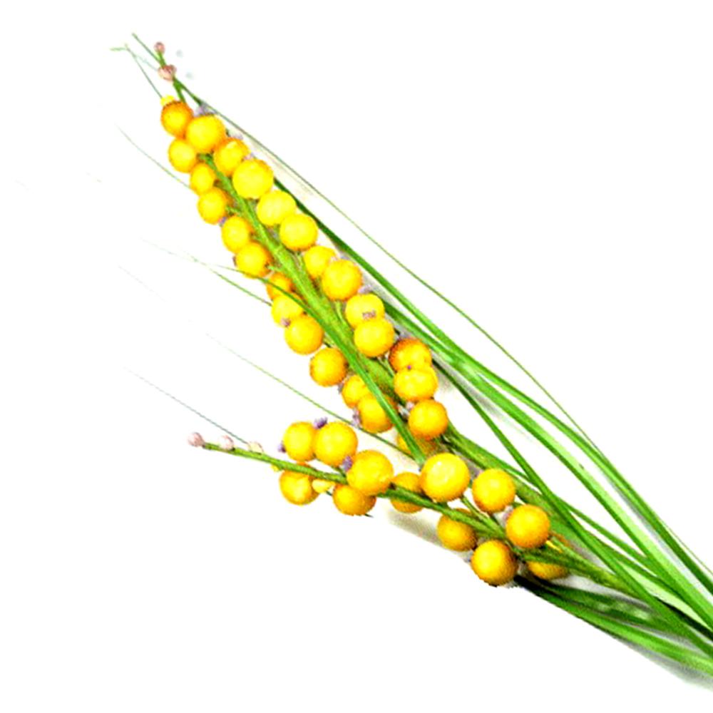 Racimo de bayas amarillo