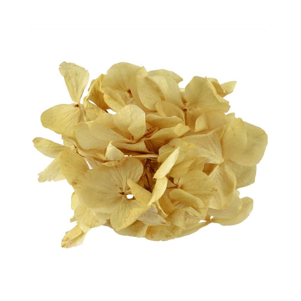 Ramillete Hortensia preservada dorado