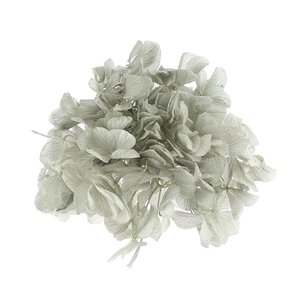 Ramillete Hortensia preservada gris