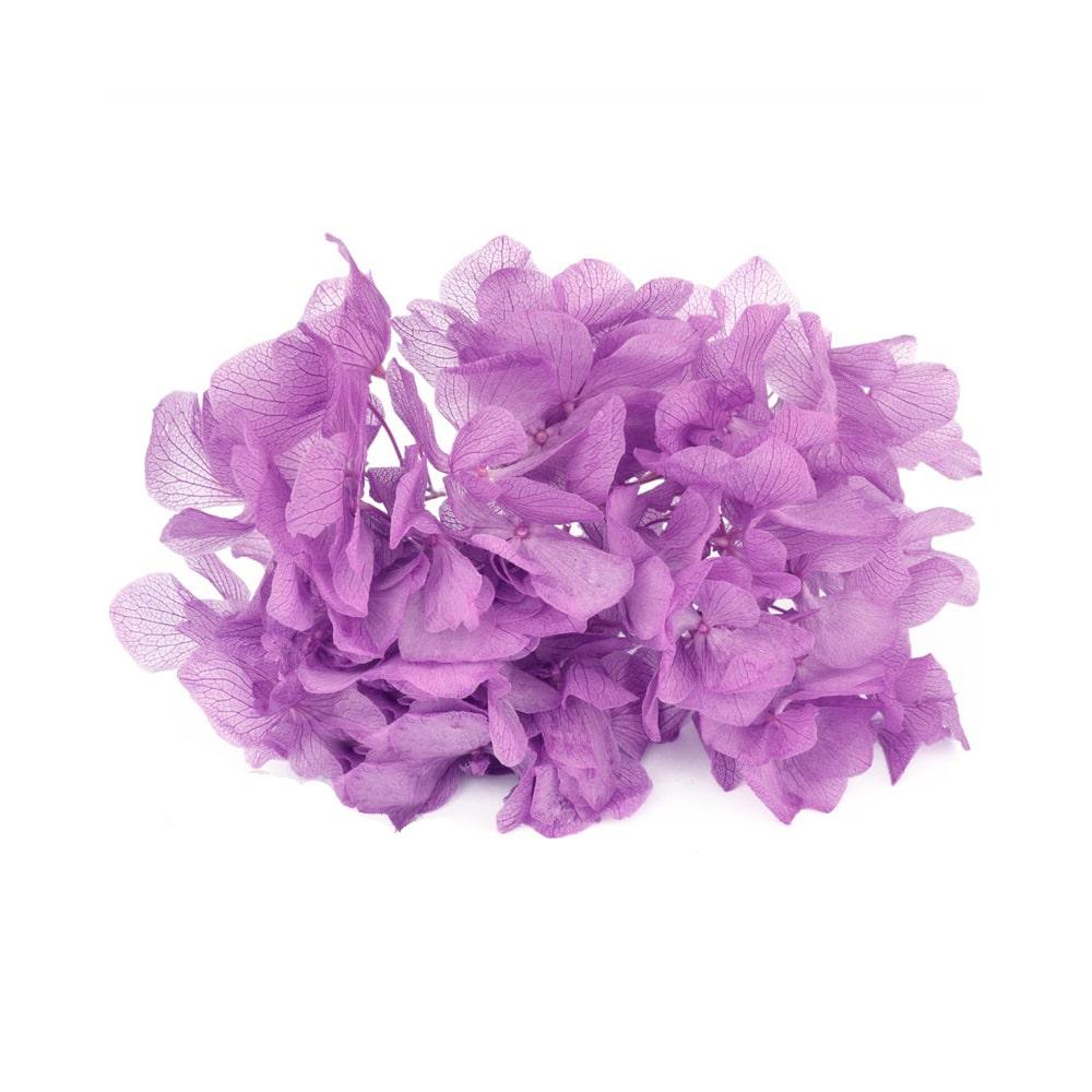 Ramillete Hortensia preservada lila