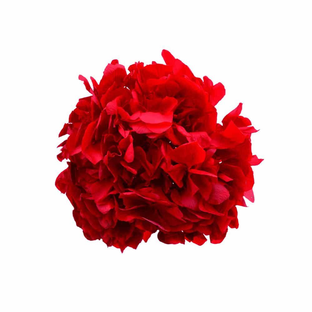 Ramillete Hortensia preservada rojo