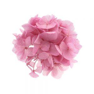 Ramillete Hortensia preservada rosa
