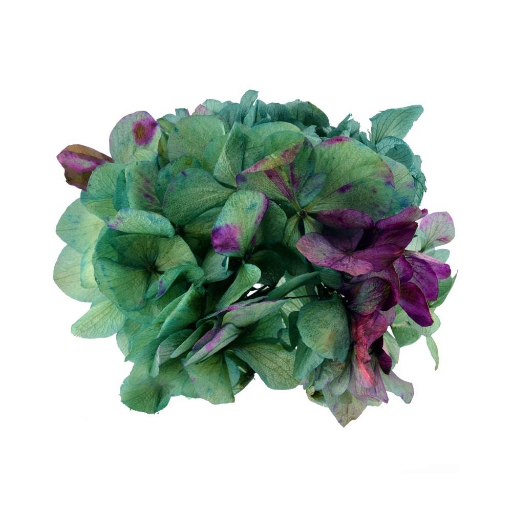 Ramillete Hortensia preservada verde botella y buganvilla