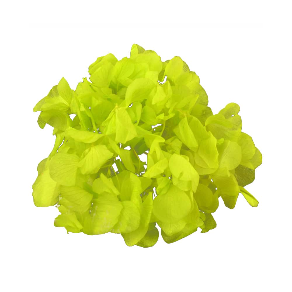 Ramillete Hortensia preservada verde limón