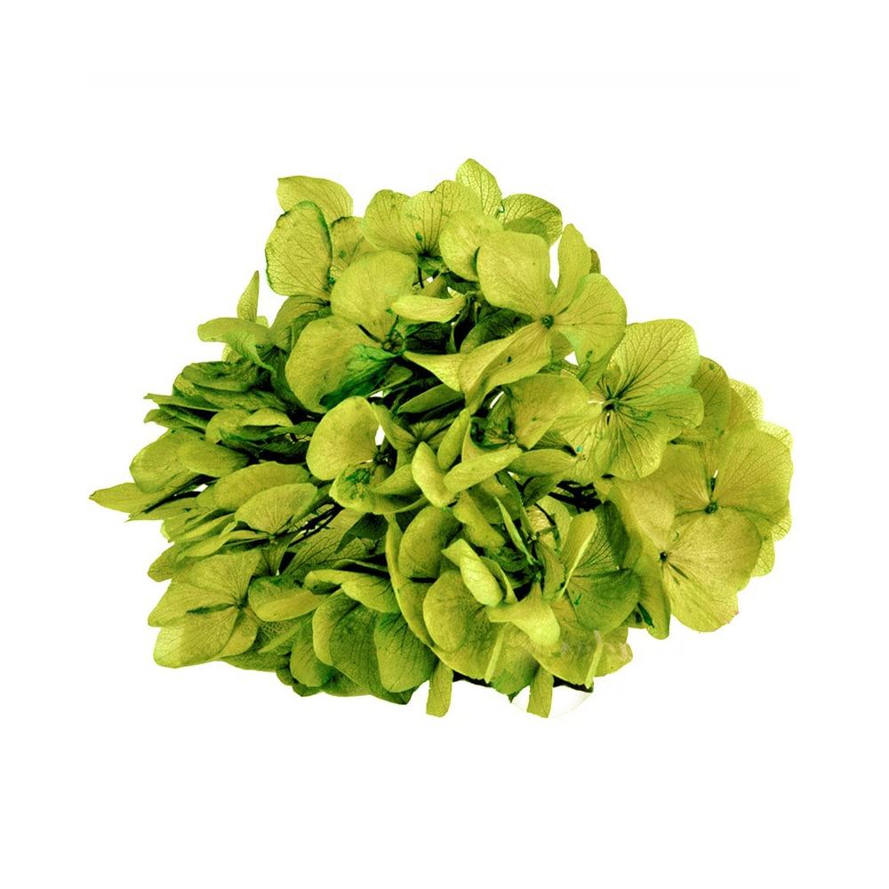 Ramillete Hortensia preservada verde medio