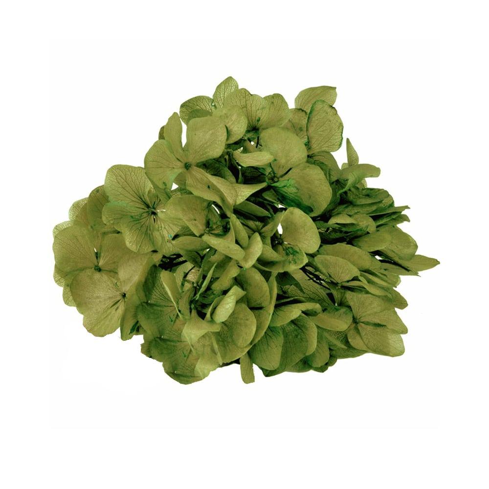 Ramillete Hortensia preservada verde oliva