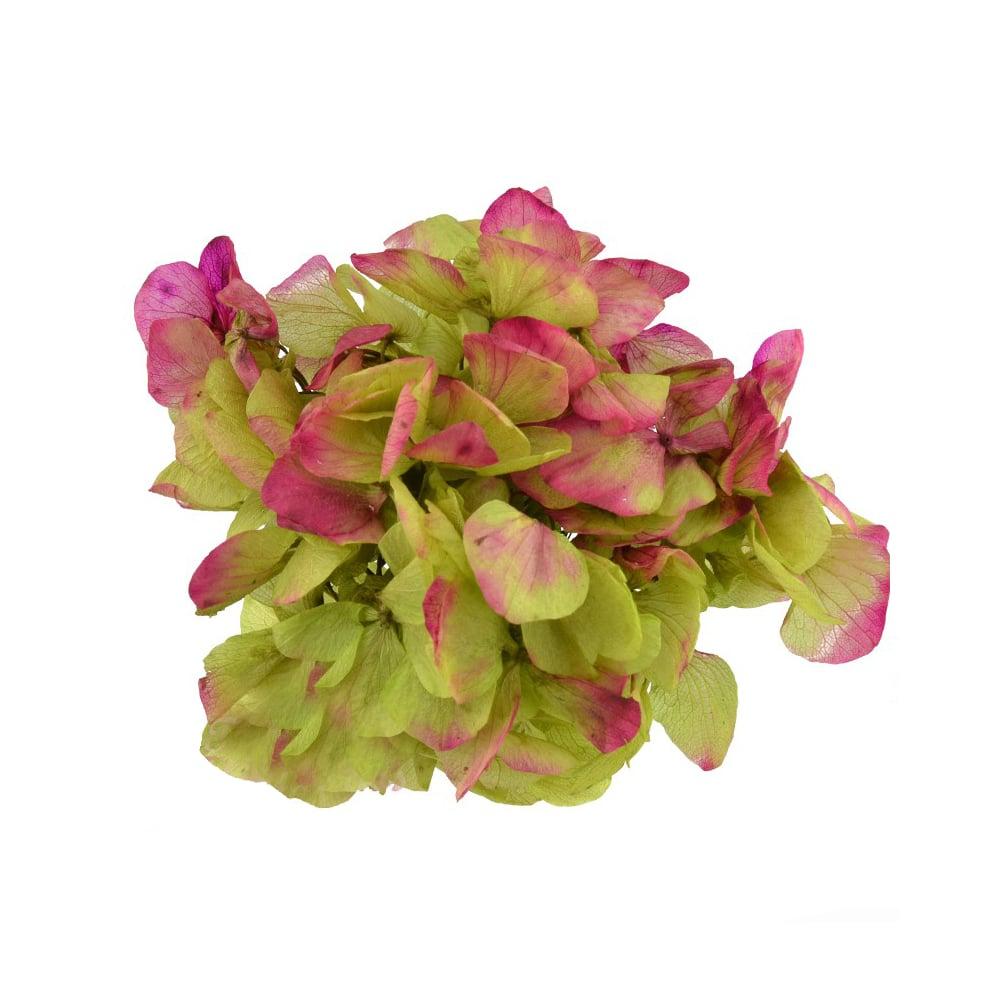 Ramillete Hortensia preservada verde y buganvilla