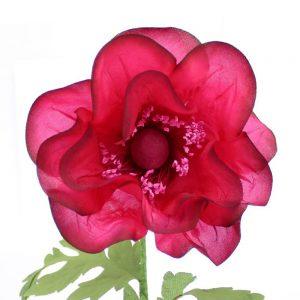 flor bailey buganvilla