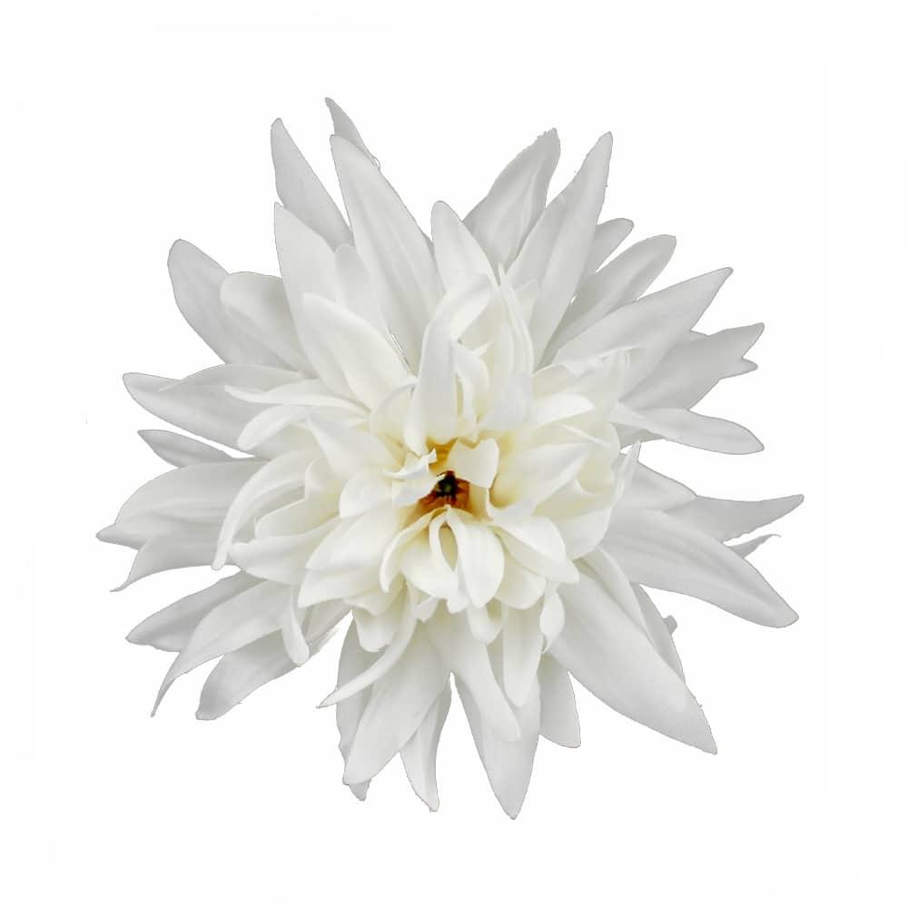 flor dalia teodora blanco