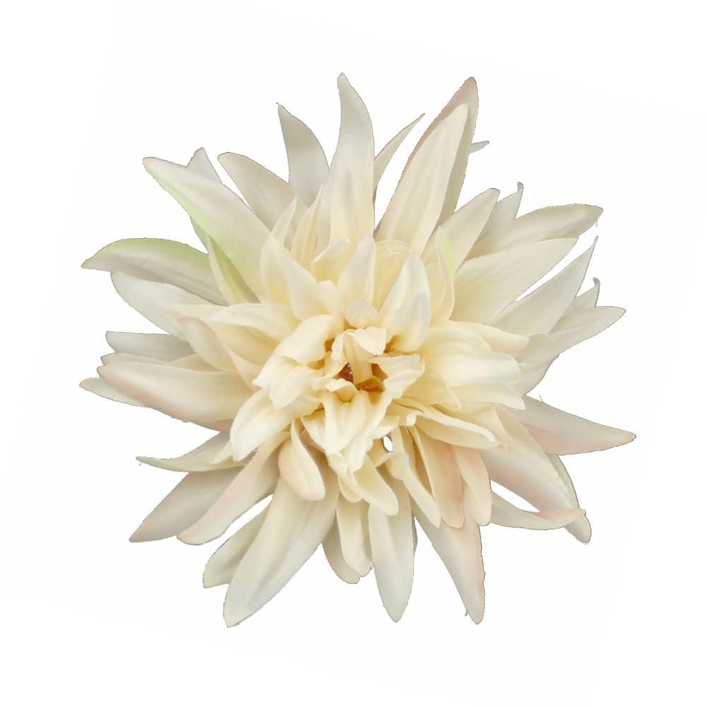 flor dalia teodora crudo