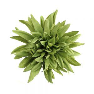 flor dalia teodora verde empolvado