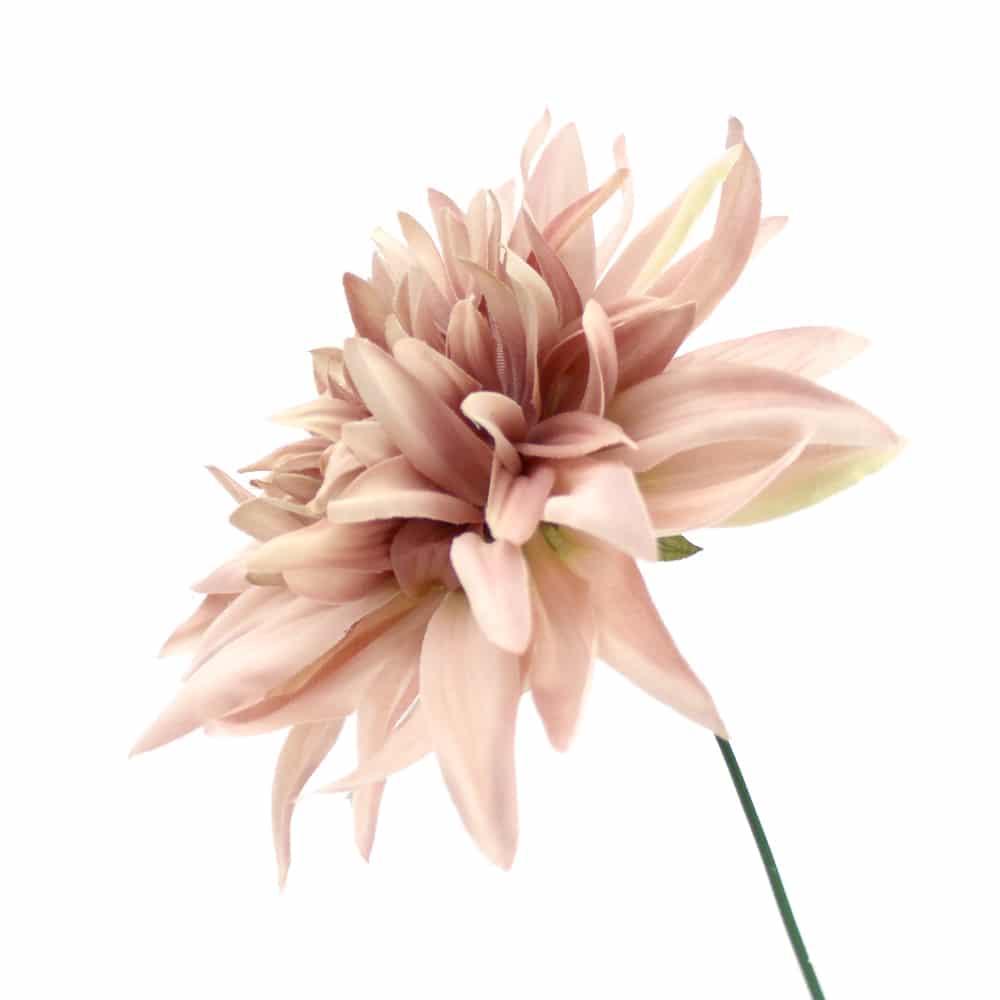 flor dalia teodora