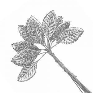 hojas raso chaeto plata