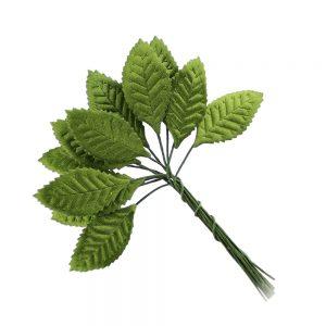 hojas raso chaeto verde medio