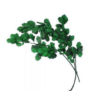 hojas roble preservada