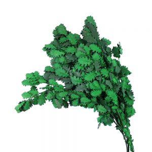 hojas roble preservada verde
